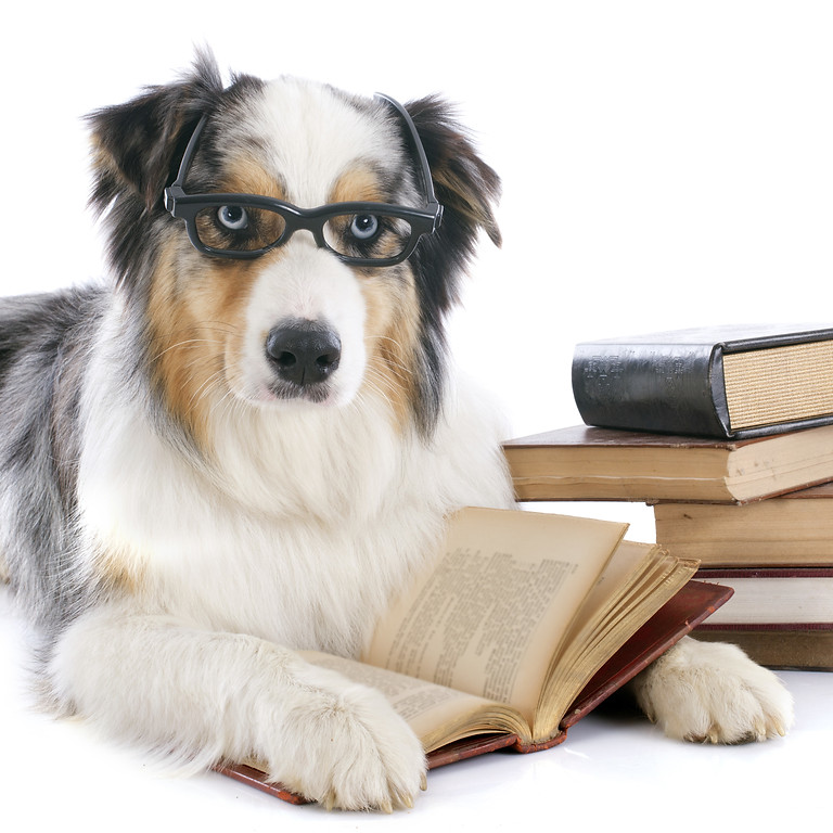 Vortrag: Hunde als Helfer - Kann mein Hund das auch?