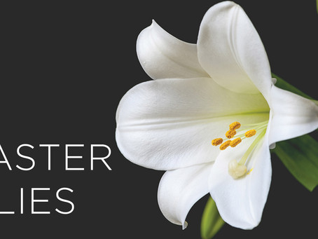 Easter Lily Production