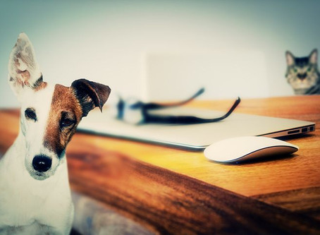 Music to calm your pet (and you)
