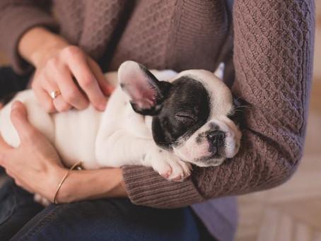 Calming nervous pets (part 2)