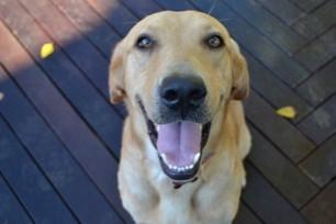 Keep Your Dogs Teeth Healthy
