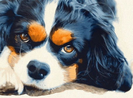 Keeping your Dog's Ears Healthy