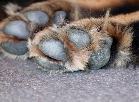 Check those paw pads
