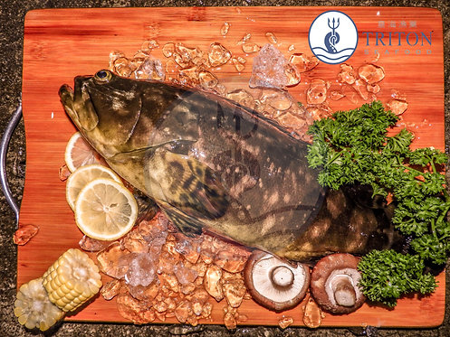 Live Hybrid Grouper (龙虎斑) $/piece