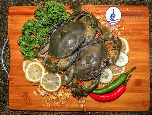 Live Mud Crab (螃蟹) $/piece