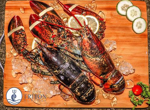 Live Canadian Lobster (加拿大龙虾) $/piece