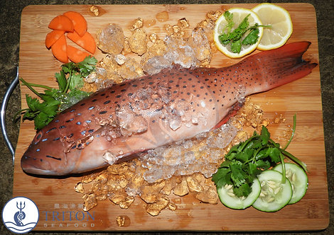 Frozen Red Grouper (冷凍紅斑魚) $/piece