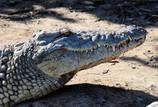 Recreational Animal Murderer Eaten by Croc. Internet Erupts in Joy.