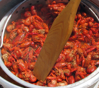 Crawfish being stirred with a boat paddl