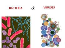 Bacteria and Viruses.jpg