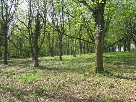 Bluebell Wood 1.jpg