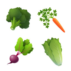 vegetable-beet-carrot-illustration