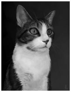 cat-black-white-portrait-painting