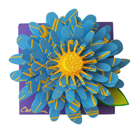Blue and Yellow Zinnia-1 Z