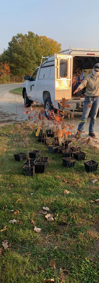 Gordon Salon 2020 2nd Tree planting