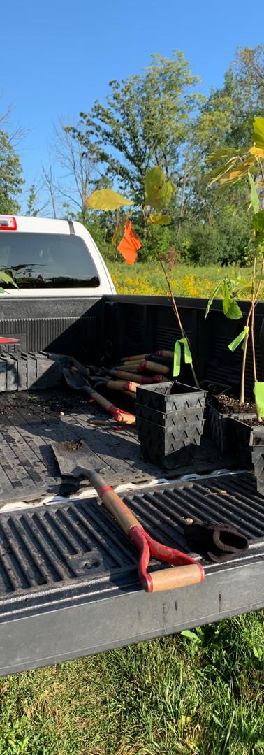 Gordon Salon 2020 1st Tree planting