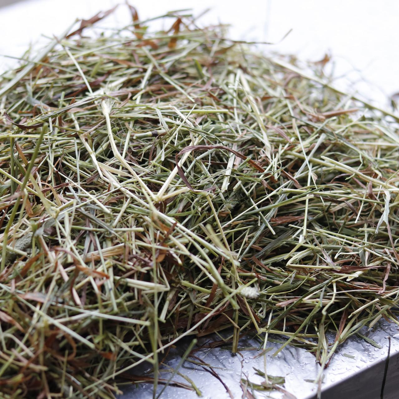 damp hay