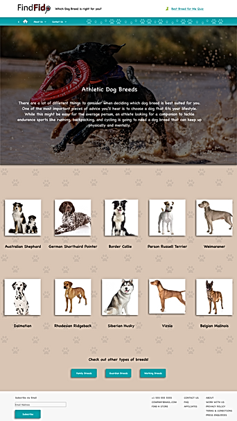 Athletic Dog Breeds Main Page.png