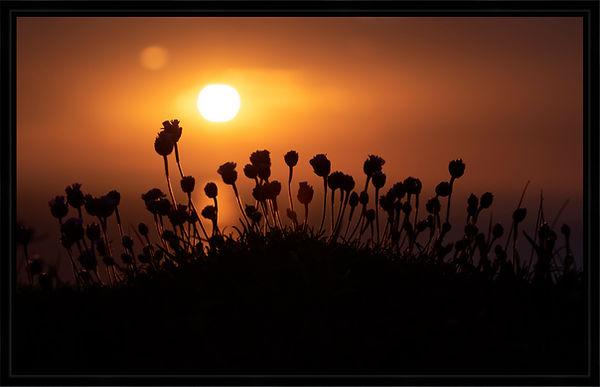 Sunset Thrift Black Frame.jpg