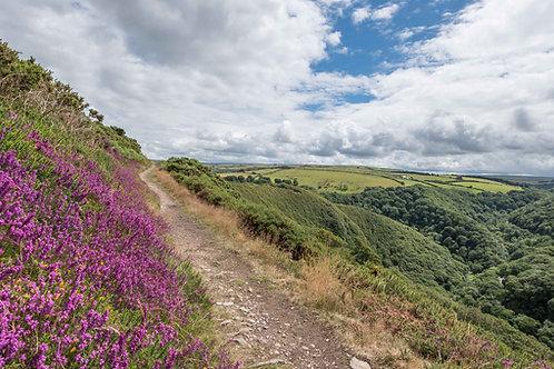 Exmoor Path Looking Down to Watersmeet