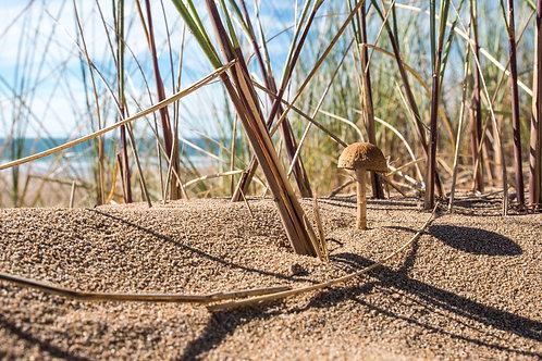 Woolacombe Dunes Mushroom