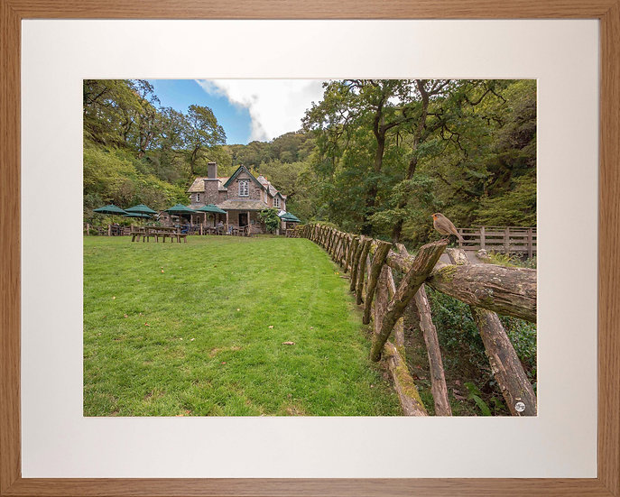 Wood Framed Picture - 400 x 500mm -Watersmeet Robin