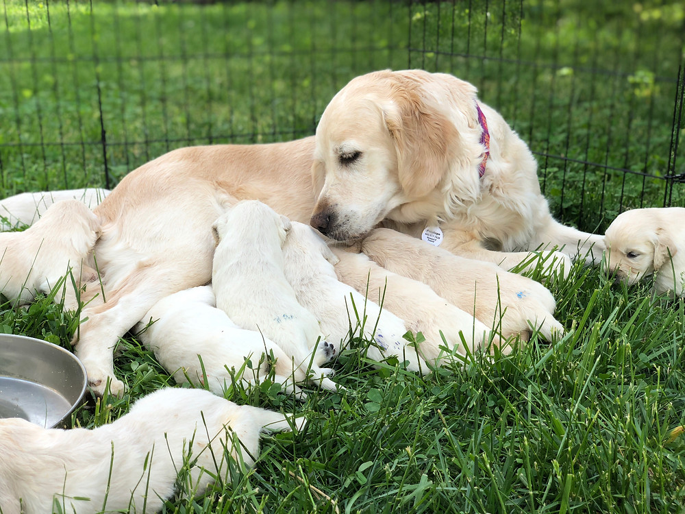 Penelope and babies