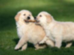 Stick Puppies!.jpg