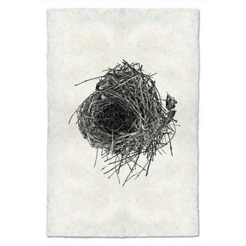 Nest Study #10