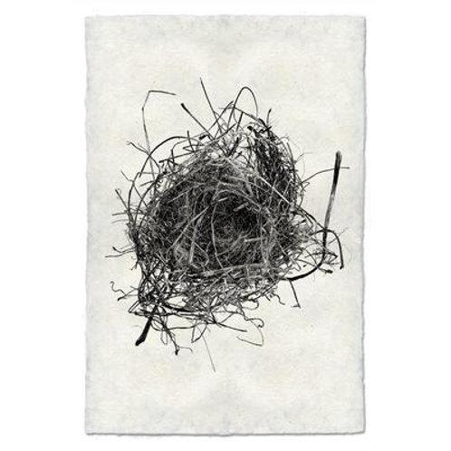 Nest Study #9