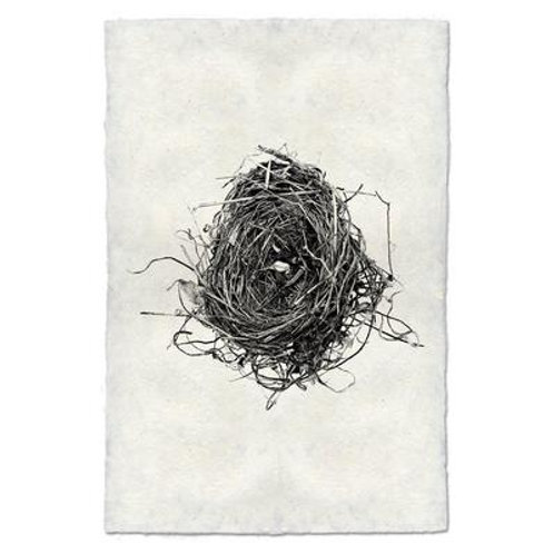 Nest Study #8
