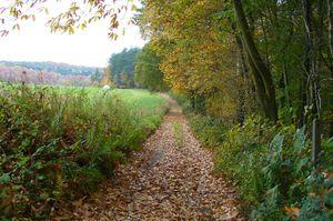 Chemin du Bois de l'Etoile (Bonlez).jpg
