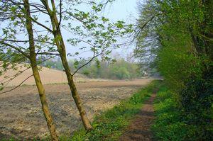 Sentier des Boissonets ((Gistoux).jpg