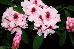 Night Blooms III