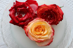 Rose Magic
