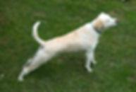 dog-stretchingup.jpg