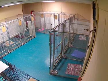 Back Kennel Room