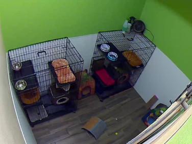 Cat Suites