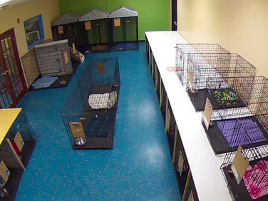 Front Kennel Room