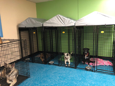 Huts & X-Large Kennels