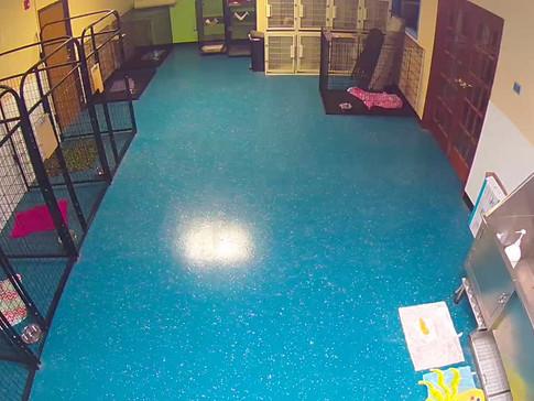 Grooming & Kennel Room