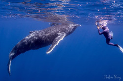 curious baby humpback whale in Reunion and Me
