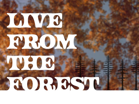 Live from the Forest   By: Matthew Schiffbauer