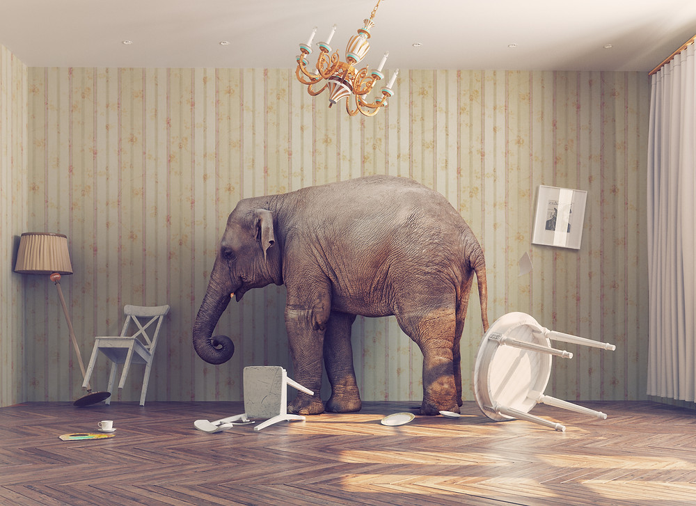elephant in room upsetting furniture