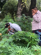 Mexico to vote on a bill that decriminalized cannabis.
