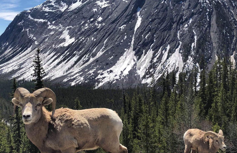 Jasper Rocky Mountain