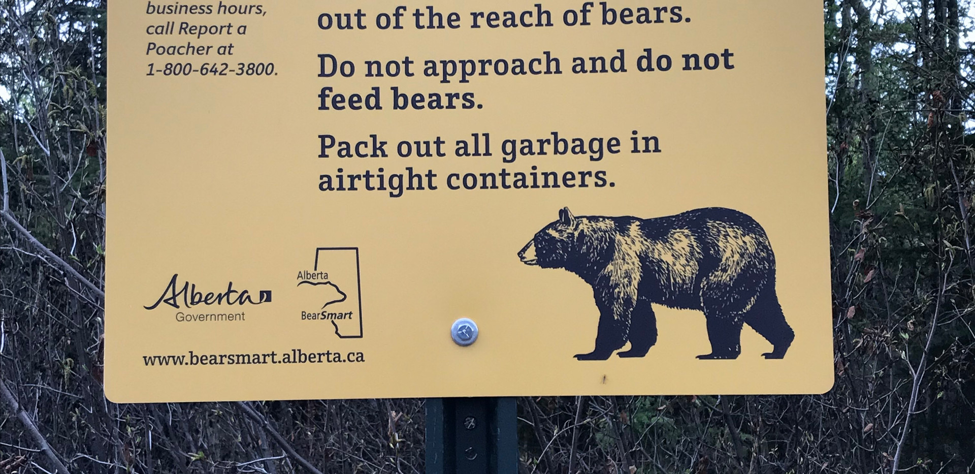 Alberta Bear Land