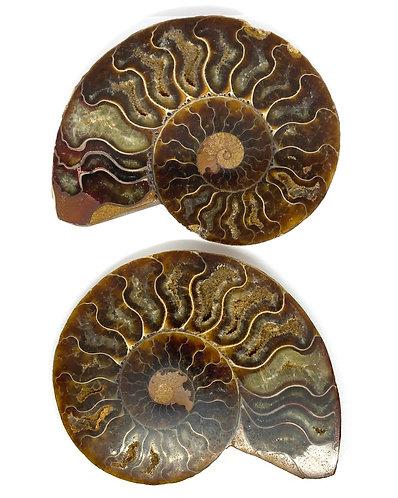 Pair of Polished Cleoniceras Ammonite