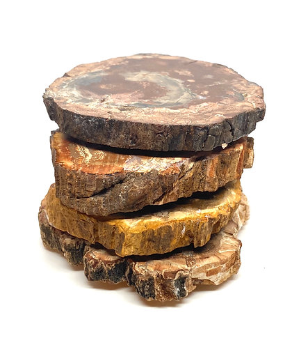 Fossil Wood Coasters