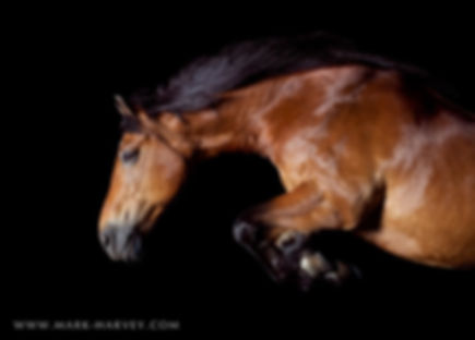Danny -Jumping Horse copyright Mark Harve